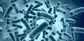 resistencia antimicrobial